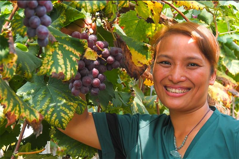 靈川縣種植產業蓬勃發展——農民豐收組圖
