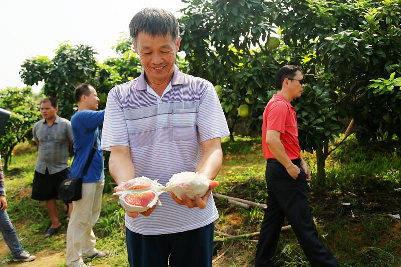 城中区红肉蜜柚喜获丰收