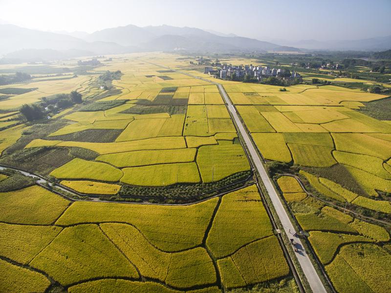 象州县百丈乡有机水稻种植助力脱贫攻坚